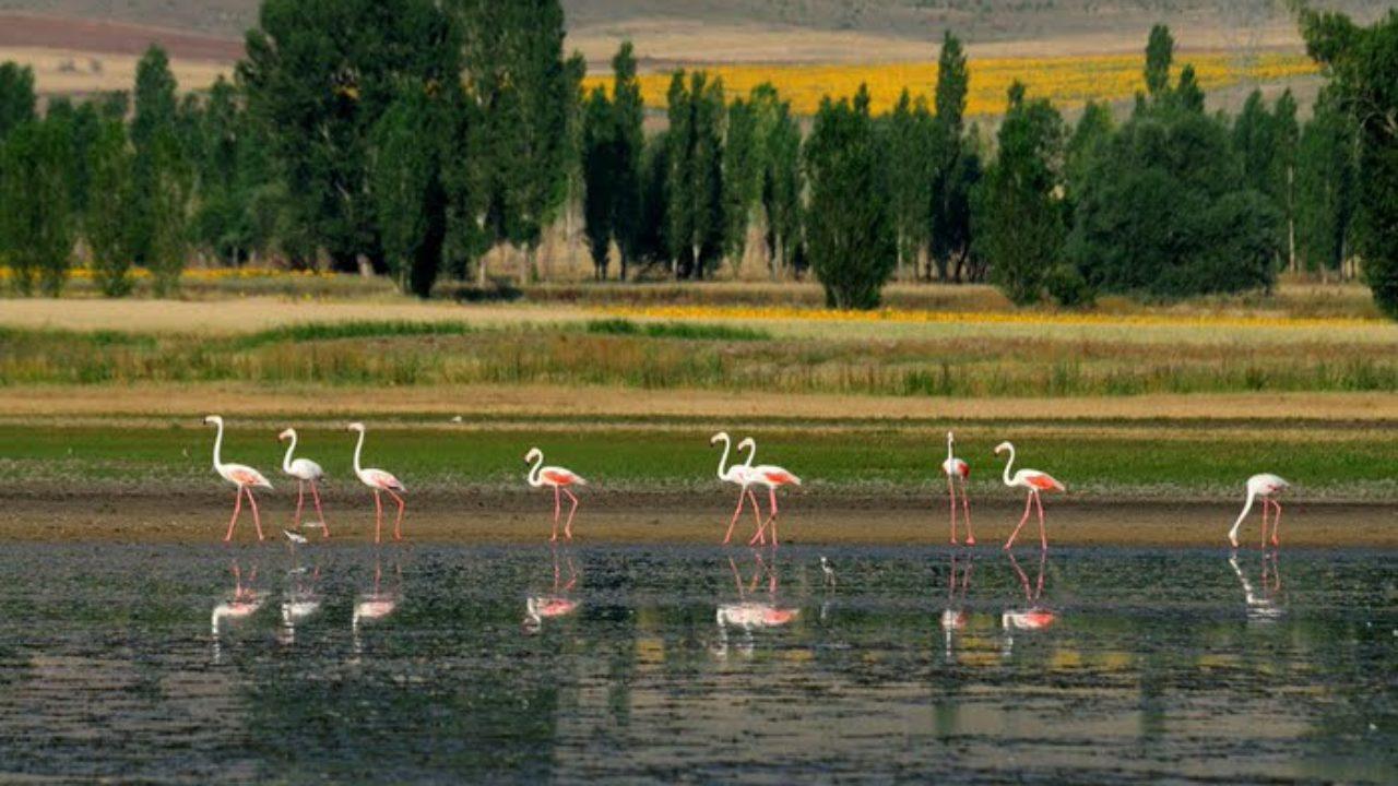 Seyfe Gölü Hakkında Bilgi, Nerede, Nasıl Gidilir, Neler Yapılır? | Azbibak
