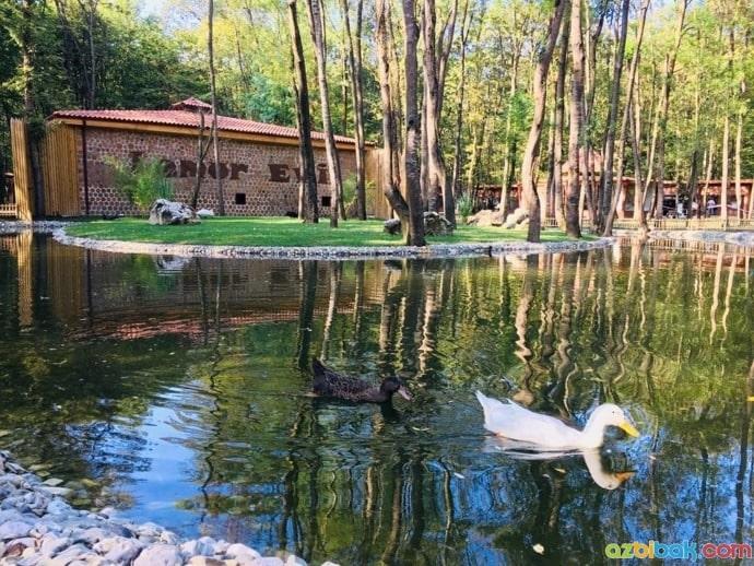 Ormanya Hayvanat Bahçesi Göl Manzarası