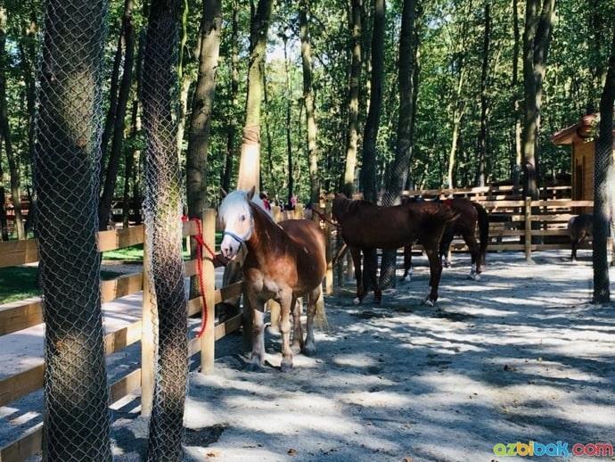 Ormanya Hayvanat Bahçesi Atlar